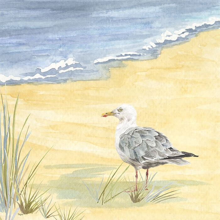 watercolor seagull on the beach by Tara Reed Designs