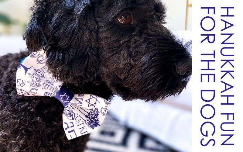 Hanukkah Bow Tie for the Dog!